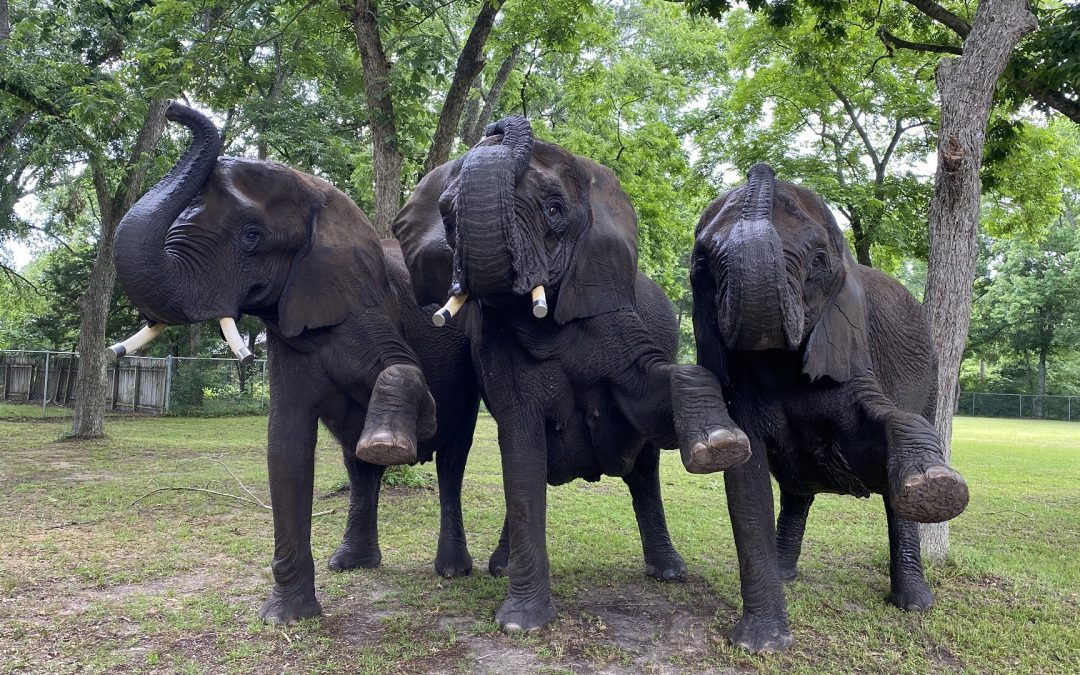 Saturday Second Elephant Tour $50